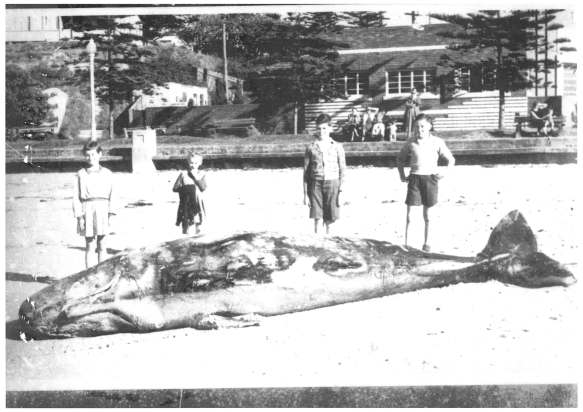 4. Whale on Austinmer Beach